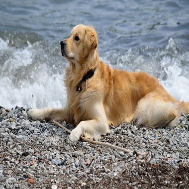 Температурный комфорт собаки.